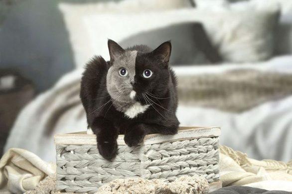 Το γατάκι που έγινε viral λόγω μιας ιδιαιτερότητάς του (φωτο)