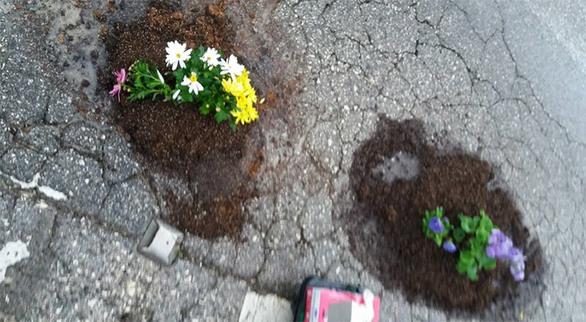 Κέρκυρα: Φύτεψαν λουλούδια για να «κλείσουν» τις λακούβες (pics)