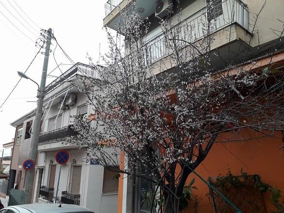 Άνθισαν τα δέντρα στις πλατείες και στις γειτονιές της Πάτρας (pics)