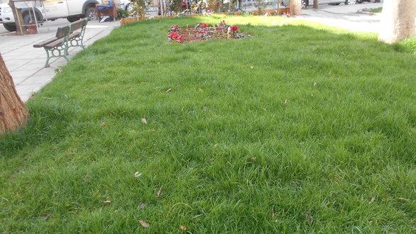 Στη Νόρμαν - Η πλατεία που έχει μεγαλώσει γενιές και γενιές Πατρινών (pics)