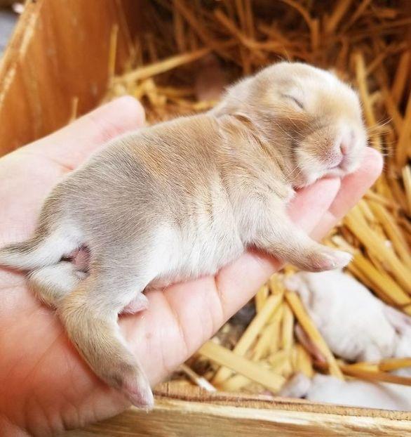 Χαριτωμένα μικρά κουνελάκια ποζάρουν στο φακό (φωτο)