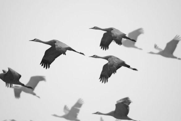 Δείτε εικόνες από την πιο εντυπωσιακή μετανάστευση πουλιών! (φωτο+video)