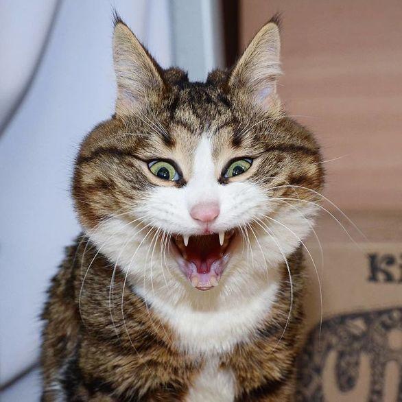 Οι εκφράσεις που παίρνει μια γάτα μπροστά στο φακό (φωτο)