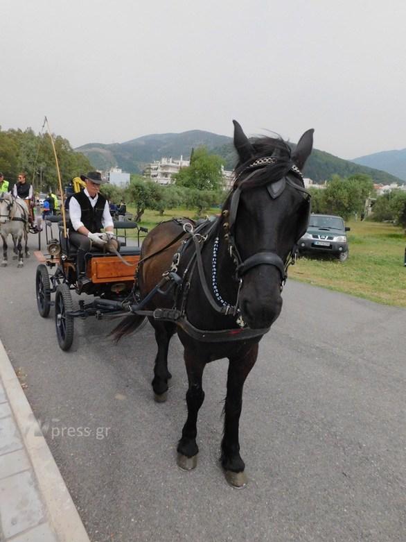 Μικροί και μεγάλοι έκαναν ιππασία στο Γρίμποβο της Ναυπάκτου! (φωτο+video)