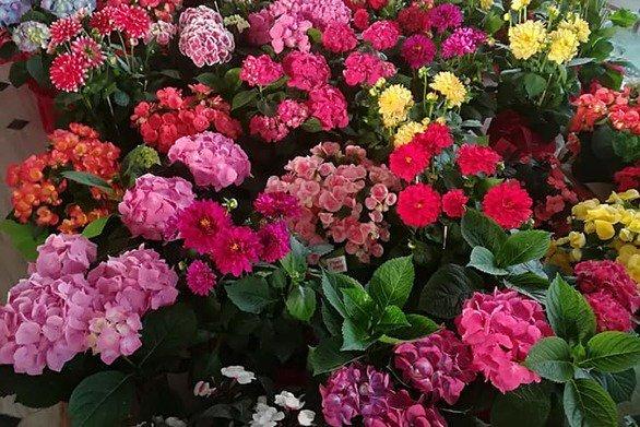 Πάτρα: Όλα έτοιμα για την γιορτή των λουλουδιών και την υποδοχή του Μάη (pics)