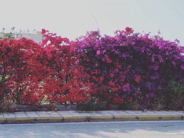 Οι μικρές ανοιξιάτικες γωνιές που ομορφαίνουν την Πάτρα (pics)