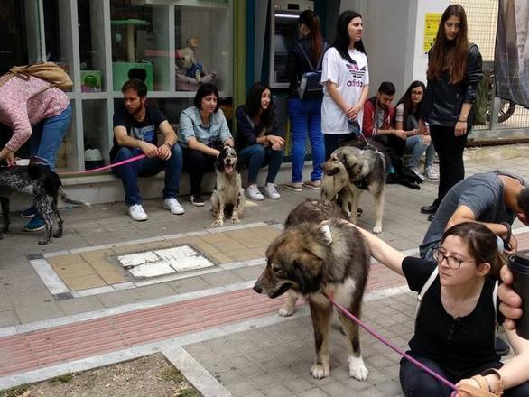 Πρώτη μέρα υιοθεσίας ενήλικων αδέσποτων σκύλων στην Πάτρα (pics)