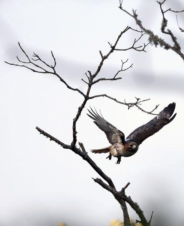 Απολαύστε φωτογραφίες της άγριας ζωής του πλανήτη μας!