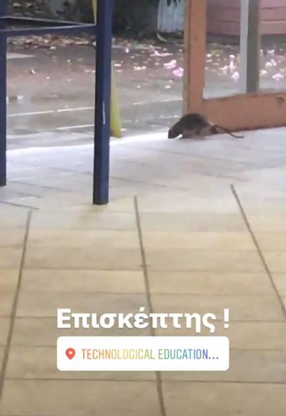 """Πάτρα: Ένα ποντίκι κάνει """"βόλτες"""" στο κεντρικό διάδρομο του κτιρίου του ΑΤΕΙ"""