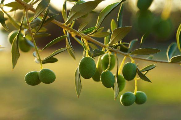 Οκτώ φρούτα που πολλοί νομίζουν ότι είναι λαχανικά (φωτο)