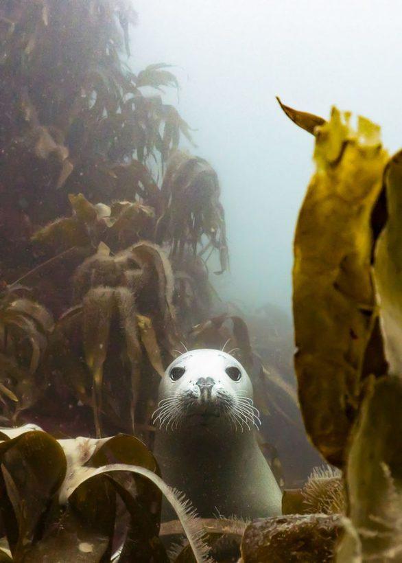 Αυτές είναι οι καλύτερες υποβρύχιες φωτογραφίες για το 2018!