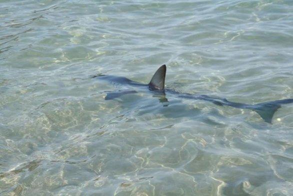 Κολυμπούσαν και είδαν μπροστά τους καρχαρία στην Κρήτη