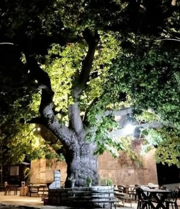 """Σούβαρδο Καλαβρύτων - Το χωριό που """"πνίγεται"""" στα έλατα και στο πράσινο (pics)"""