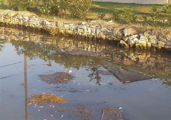 Κέρκυρα: Nεκρά ψάρια στο ποτάμι της Λοξίδας (pics)