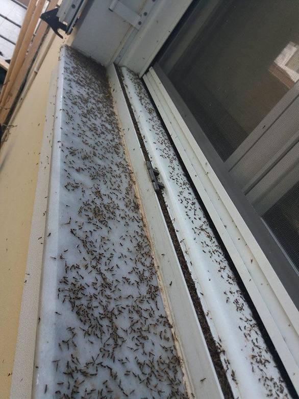 Αφόρητη η κατάσταση στο Αιτωλικό με τις αράχνες και τα κουνούπια (pics+video)