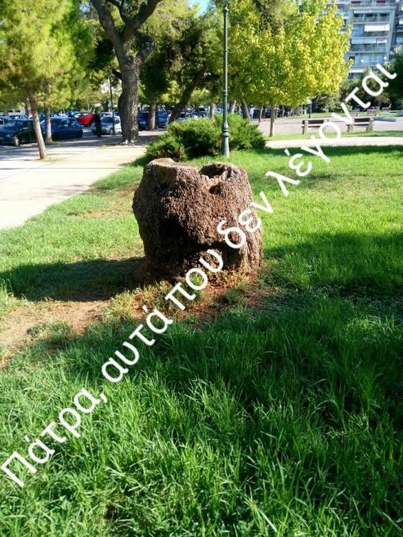 Πάτρα: Οι κορμοί από τους κομμένους φοίνικες παραμένουν στα Ψηλαλώνια (pics)