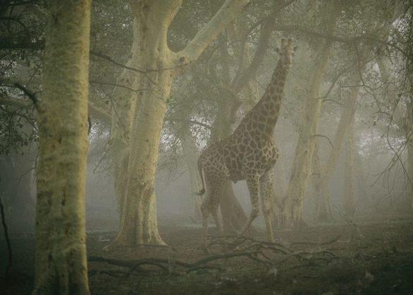 Οι καλύτερες φωτογραφίες άγριας ζωής!