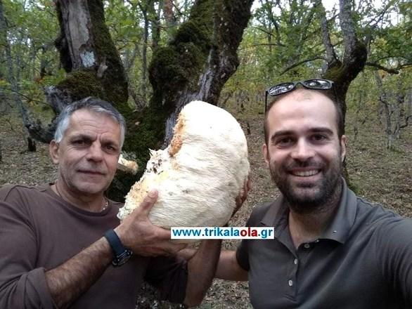 Σπάνιο είδος μανιταριού βρέθηκε στα Τρίκαλα (φωτο)