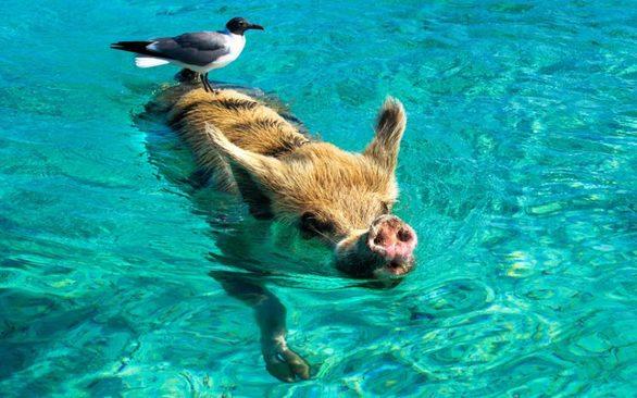 Τα ζώα που βαριούνται να... μετακινηθούν (φωτο)