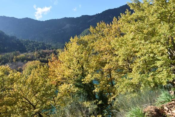 Στο δάσος της Ζαρούχλας - Ένα από τα ωραιότερα μέρη της ορεινής Αχαΐας (pics)
