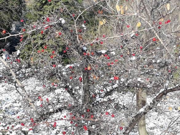 «Λευκές» εικόνες από τα ορεινά χωριά του Ρίου (φωτο)