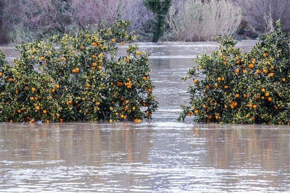 Δυτική Ελλάδα: Πλημμύρισε ο Αλφειός - Καταστράφηκαν καλλιέργειες (pics+video)