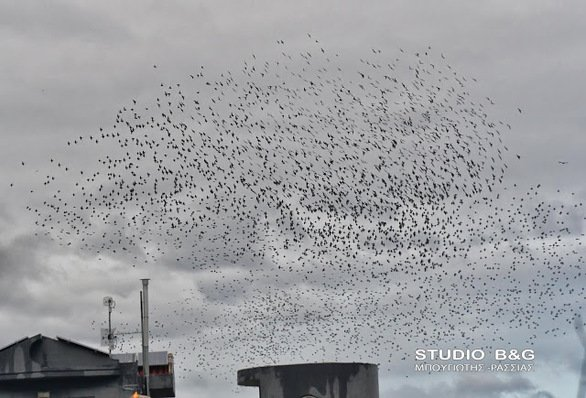 Γέμισε ο ουρανός ψαρόνια στη Νέα Κίο Αργολίδας (φωτο)