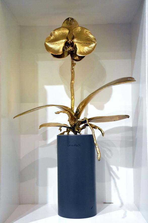 Μια ορχιδέα από χρυσό, για πρώτη φορά στην Πάτρα (φωτο)