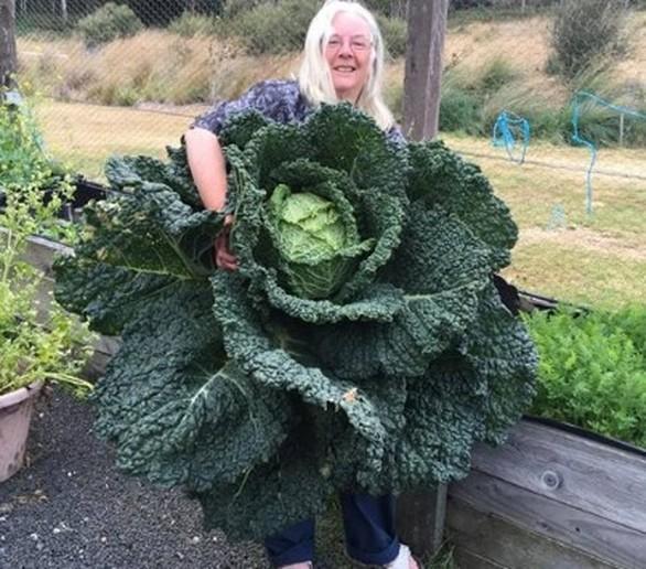 Ένα λάχανο για το ρεκόρ Γκίνες