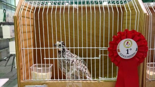 Ο Πατρινός που μπήκε στο μαγικό κόσμο των πουλιών και έβγαλε φτερά η ψυχή του! (pics)