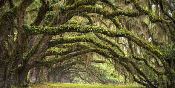 Αγγλία - Το δάσος με τις αρχαίες βελανιδιές