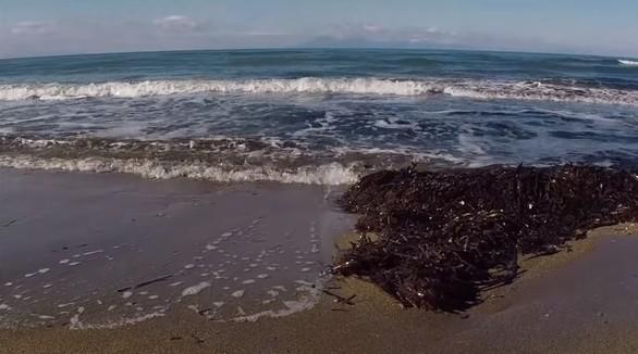 Δείτε βίντεο: Παρατηρώντας φλαμίνγκο στη λιμνοθάλασσα του Κοτυχίου