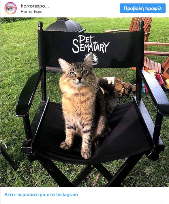 Ο πραγματικός σταρ στο «Pet Sematary» είναι μια γάτα Μέιν Κουν