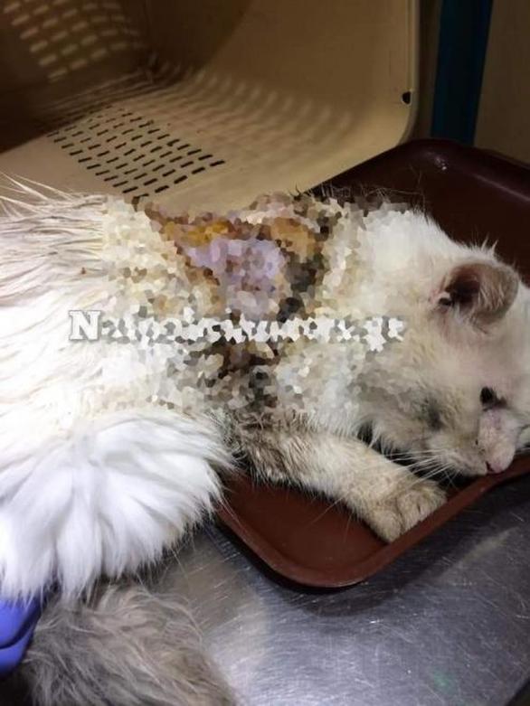 Σοκ στη Ναυπακτία: Έριξαν οξύ σε γάτα