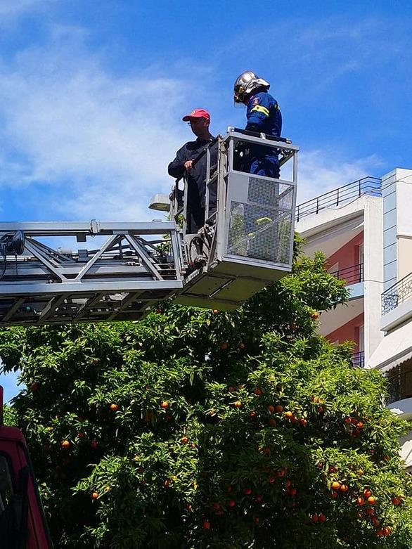 Πάτρα: Πυροσβέστες έσωσαν περιστέρι που είχε τυλιχθεί σε πλαστική σακούλα (φωτο)