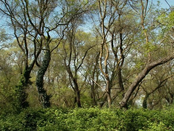 Το δάσος της Δυτικής Ελλάδας, που φημίζεται για τη σπανιότητά του (φωτο+video)