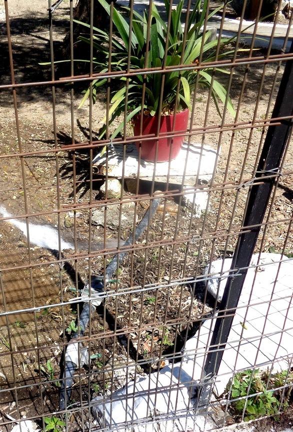Καταγγελία για σπατάλη δημοτικού νερού στην Πάτρα - Κίνδυνος για τους πεζούς (φωτο)