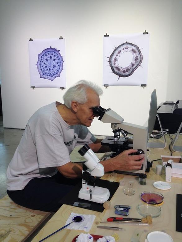 Πριμαρόλια: Η μαύρη σταφίδα στο μικροσκόπιο! (φωτο)