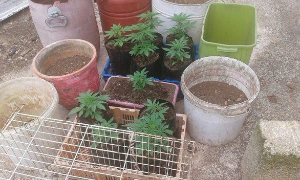 Συνελήφθη ισοβίτης - δραπέτης φυλακών που καλλιεργούσε δενδρύλλια κάνναβης (φωτο)