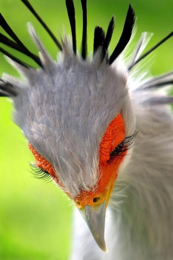 Ένα πτηνό με εντυπωσιακές… βλεφαρίδες