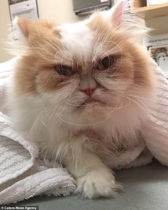 """Βρέθηκε ο διάδοχος της """"γκρινιάρας γάτας"""" (φωτο+video)"""