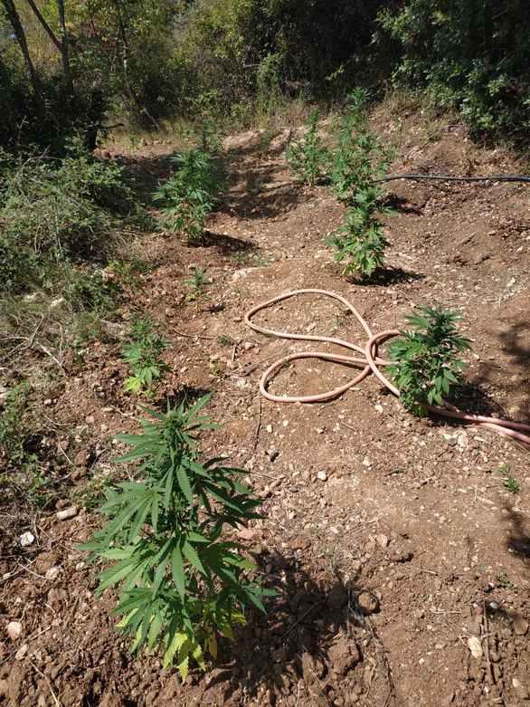 Δυτική Ελλάδα: Συνελήφθησαν τρεις δράστες οι οποίοιείχαν διακινήσει τουλάχιστον έξι κιλά κάνναβης