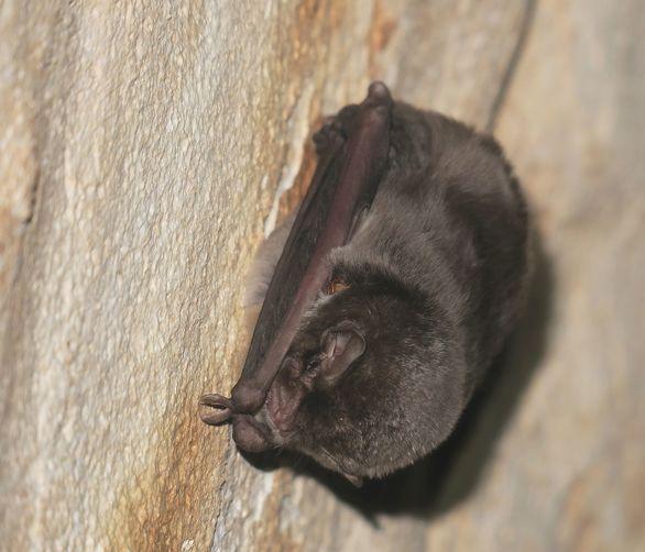 Σπήλαιο Λιμνών - Καστριά: Ανακαλύφθηκε η μεγαλύτερη αποικία νυχτερίδων στην Ελλάδα (φωτο)