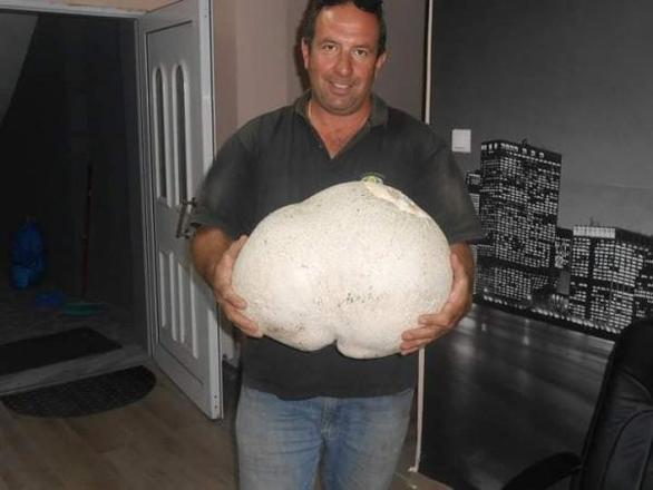 """Μανιτάρι """"γίγας"""" στα Γρεβενά - Ζυγίζει 11 κιλά (φωτο)"""