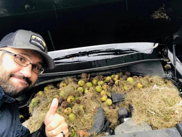 ΗΠΑ: Καρύδια και χόρτα βρήκε οδηγός κάτω από το καπό του αυτοκινήτου της (φωτο)