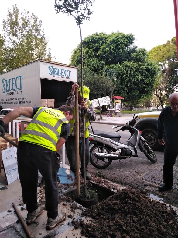 Συνεχίζονται οι φυτεύσεις δέντρων στα πεζοδρόμια της Πάτρας