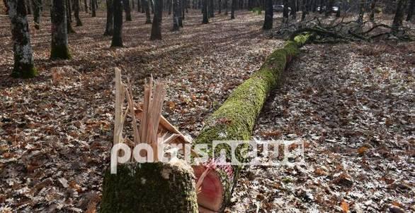 Δυτική Ελλάδα: Oικολογική καταστροφή στο σπάνιο δάσος της Φολόης (φωτο)