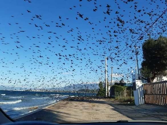 """Όταν τα πουλιά """"σκέπασαν"""" τον ουρανό στα Βραχνέικα της Πάτρας"""