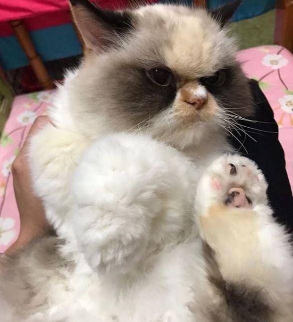 Αυτή είναι η πιο κατσούφα γάτα στον κόσμο (φωτο)