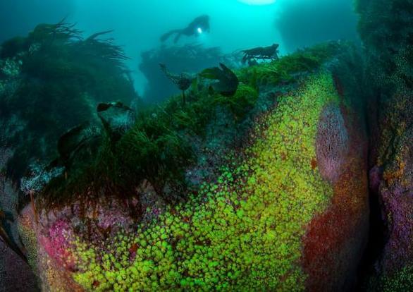 Εντυπωσιακές λήψεις στις καλύτερες υποβρύχιες φωτογραφίες του 2020